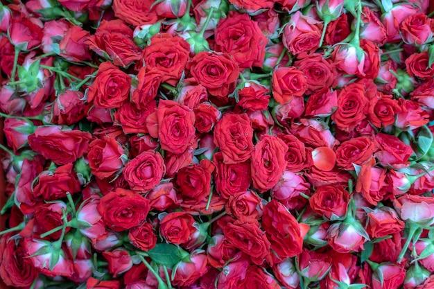 Красочная роза, красные цветы для продажи, чтобы предложить богу во время поклонения в маленькой индии, уличном рынке, сингапуре, крупным планом, вид сверху. фон красных роз