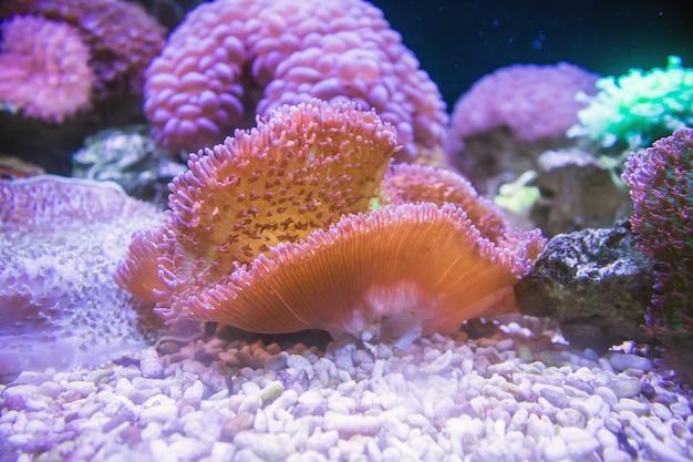 Colorful sea anemone in aquarium