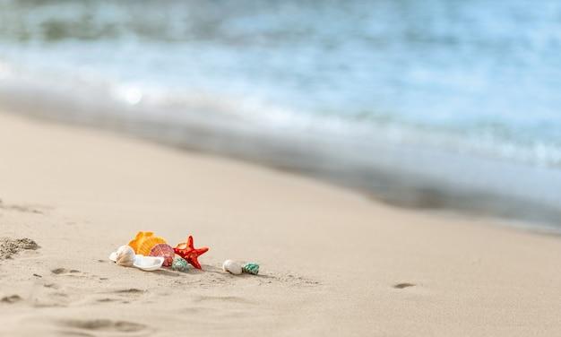 해변 모래 해변의 다채로운 조개, 흐린 파란색 배경, 여름 및 휴가 개념, 복사 공간.