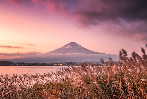 Colorful sky with fuji mountain and golden meadow at morning