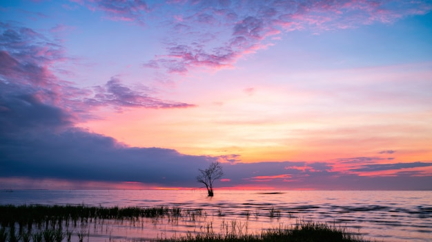 Colorful sky with lonely tree in lake at pak pra village, pha