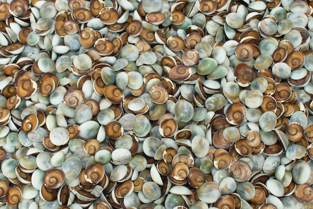 Colorful small snail shell background
