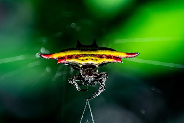 Colorful spider on green leaf background