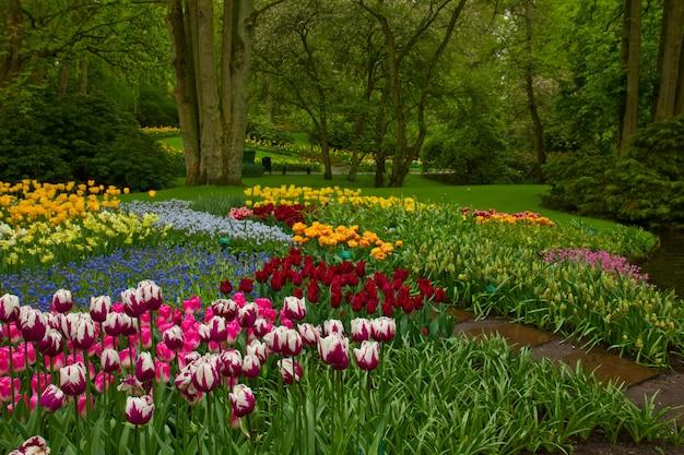 カラフルな春の花とオランダの庭「キューケンホフ」、オランダの花