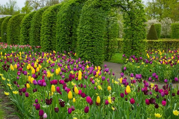 オランダのオランダの春の庭キューケンホフのカラフルな春の花
