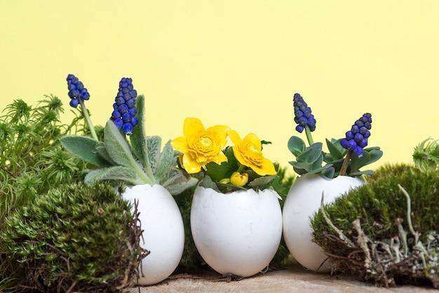 Красочные весенние цветы в горшке из яичной скорлупы на пасху