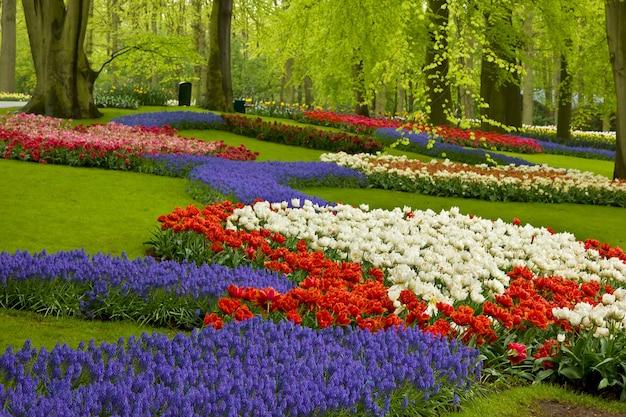 オランダ、キューケンホフ公園のカラフルな春の花