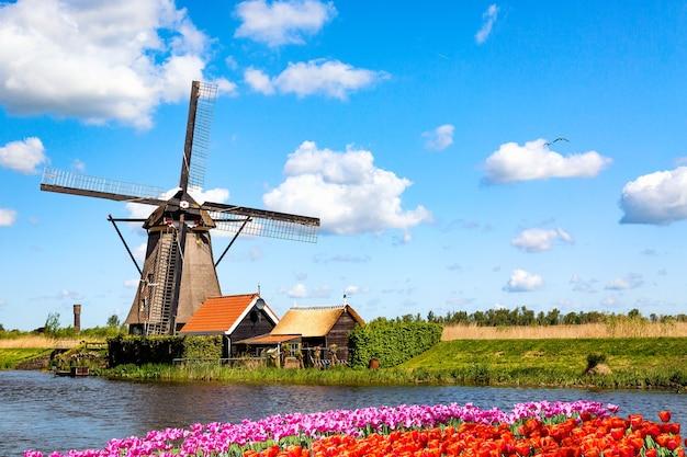 네덜란드, 유럽의 다채로운 봄 풍경입니다. 네덜란드의 튤립 꽃 화단이있는 kinderdijk 마을의 유명한 풍차. 네덜란드의 유명한 관광 명소.
