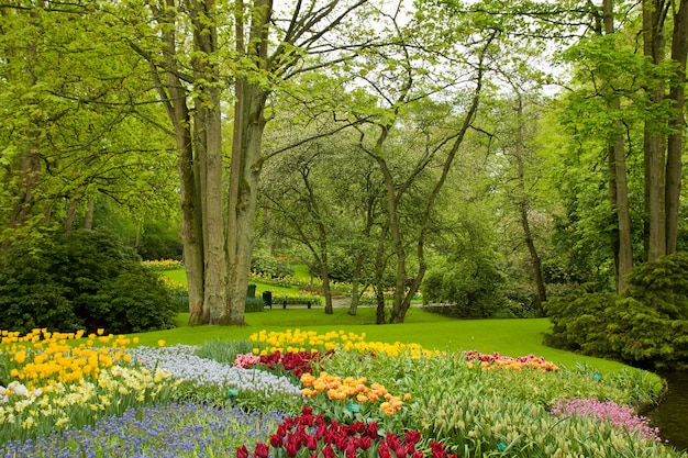 オランダのオランダの庭「キューケンホフ」のカラフルな春の芝生