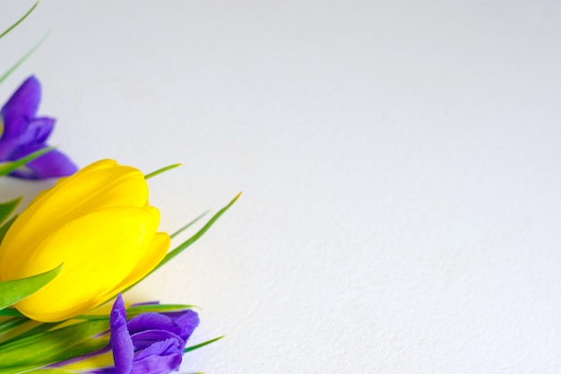 Colorful spring tulips and iris flowers on white background