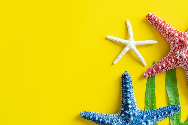 Colorful starfishes on yellow background with free space.