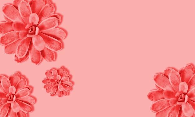 Цветастое суккулентное растение на предпосылке цвета коралла. жесткая тень. жесткий свет. цвет тренда.