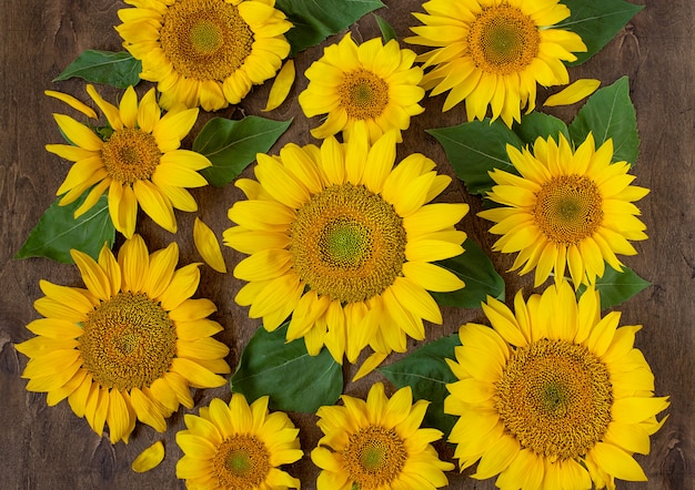Colorful sunflowers on a dark wooden background top view