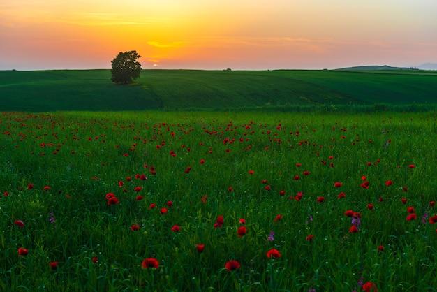緑の野原に沈む夕日