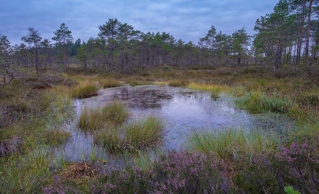 Красочный болотный пейзаж на рассвете летним вечером