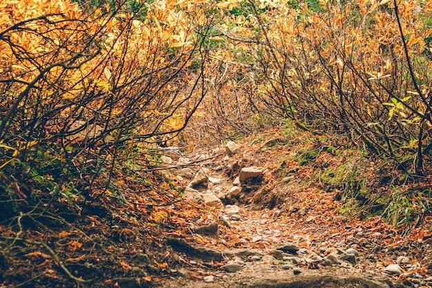 사람없이 다채로운 나무와 숲 자연 하이킹 코스.