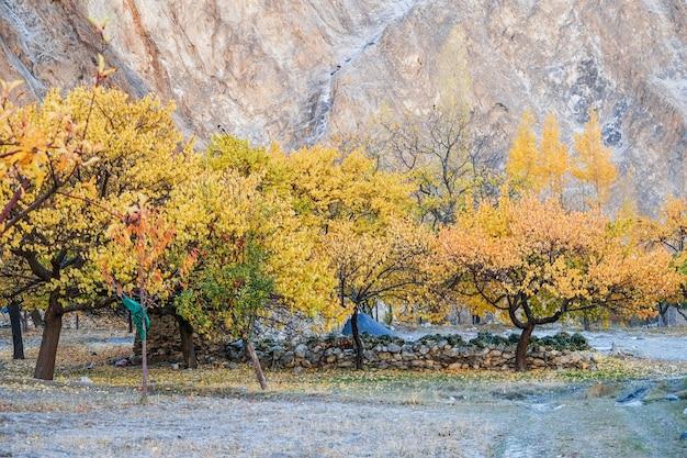 Khyber 마에서가 다채로운 나무입니다. 길기트 발티 스탄, 파키스탄