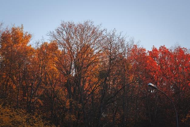 Разноцветные деревья осенью на фоне неба - идеально подходят для обоев