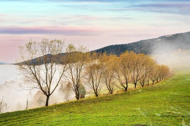 짙은 회색 안개로 덮인 카르파티아 산맥의 다채로운 나무