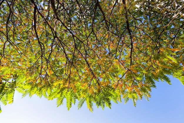 Разноцветные деревья в лесу осенью