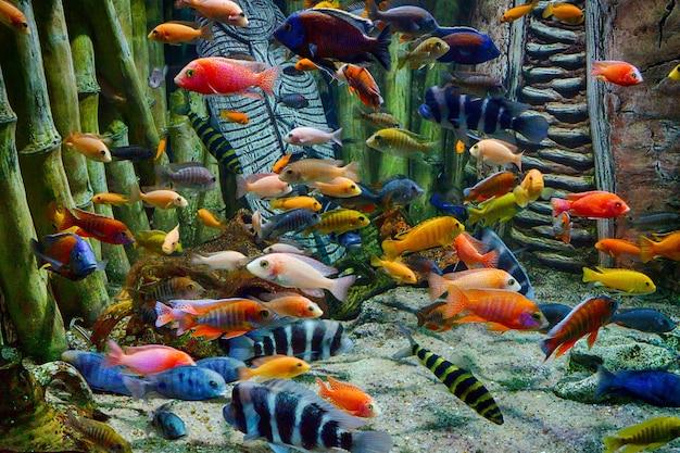 水族館の水中のカラフルな熱帯魚と海洋生物