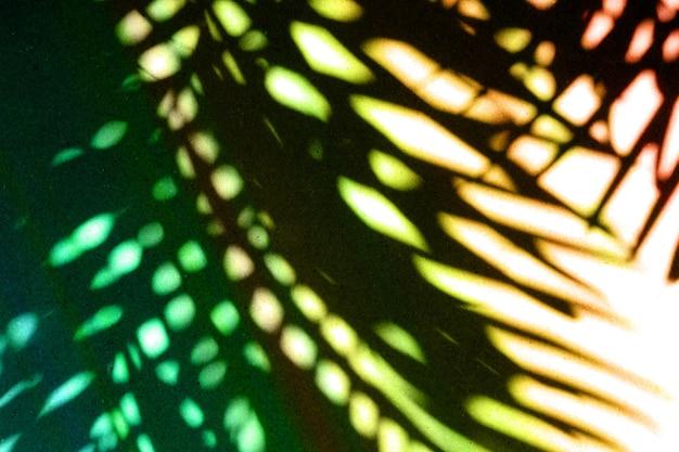 紙の壁の背景にカラフルな熱帯のヤシの葉の影。フラットレイ。ヤシの木の葉と最小限の夏のコンセプト。クリエイティブなコピースペース。