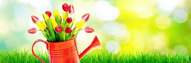 じょうろのカラフルなチューリップの花束。