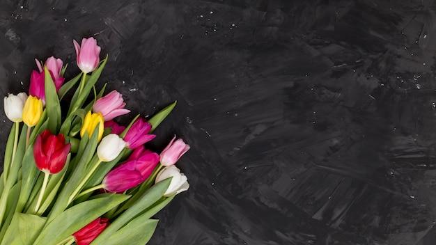 Colorful tulip flowers arranged on corner of black background