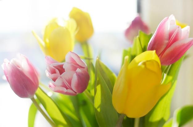 Красочный тюльпан цветы фон, размытые цветы.