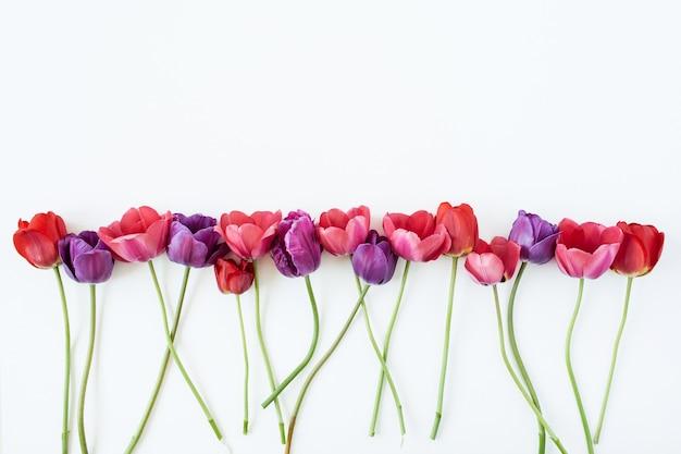 白い背景の上のカラフルなチューリップの花。