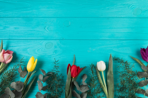 Colorful tulips and green leaves on turquoise wooden backdrop