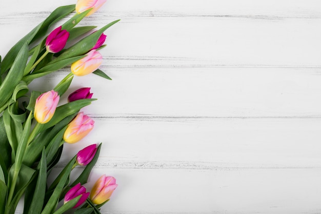 Colorful tulips in line
