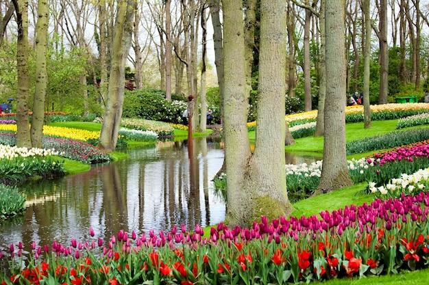 네덜란드 암스테르담 지역의 keukenhof 공원에서 강둑에 화려한 튤립.