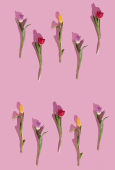 Colorful tulips pattern on pastel background creative love lay copy space