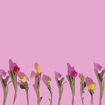Colorful tulips pattern on pastel background nature flat lay copy space