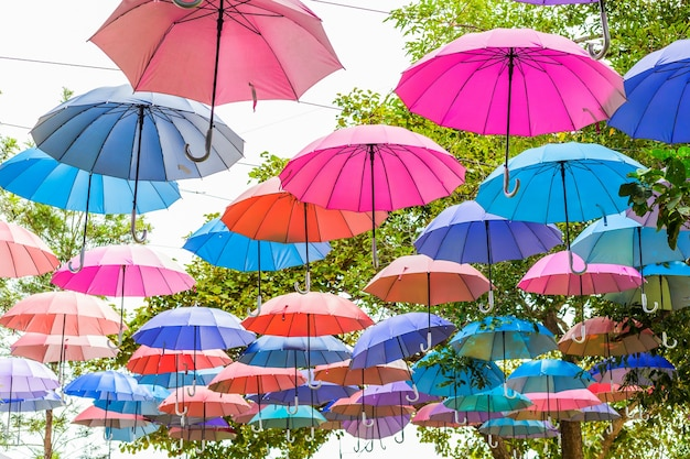 Colorful umbrellas in the tree