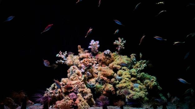 Красочная подводная рыба и коралловый риф