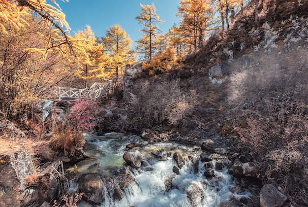 Colorful waterfall in autumn pine forest