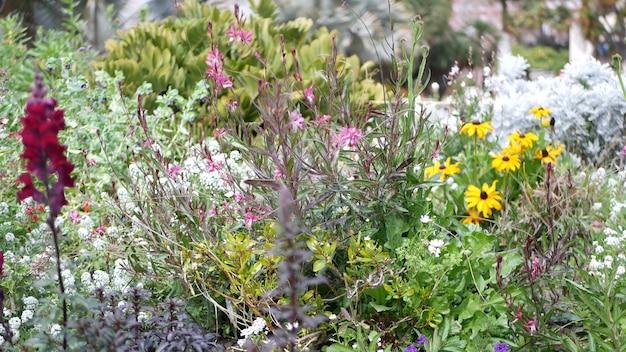 Красочный цветок полевого цветка, весенний утренний луг, естественный ботанический фон. цветок нежное цветение soft focus, садоводство в калифорнии, сша. разноцветная романтическая весенняя флора. сорт трав.