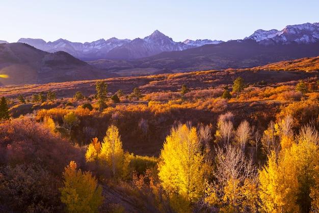 アメリカ合衆国、コロラド州のカラフルな黄色の秋。秋のシーズン。