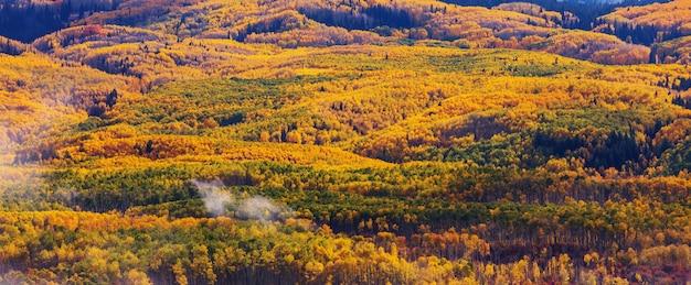米国コロラド州のカラフルな黄色い秋。秋のシーズン。