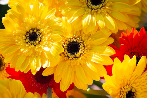 Colorful yellow gerbera daisy  background