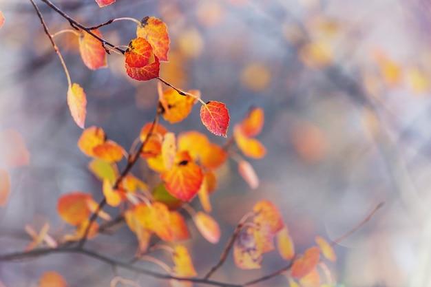 Красочные желтые листья в осенний сезон. снимок крупным планом. подходит для фонового изображения.