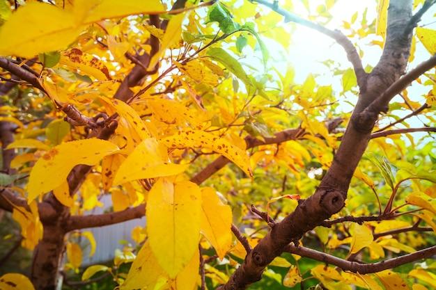 Красочные желтые листья в осенний сезон.