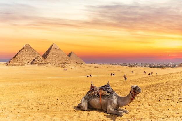 ギザのピラミッドとエジプトのラクダの近くの夕日の色。