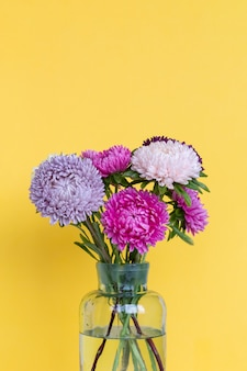 Colourful asters flowers bouquet in glass vase.