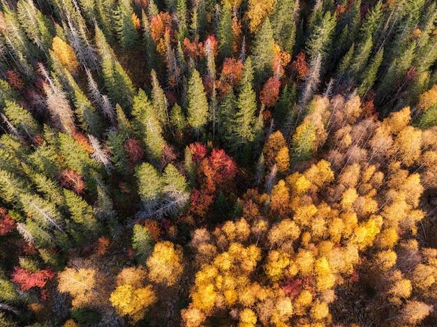Яркие осенние краски в изображении леса наверху, снятое с помощью дрона.