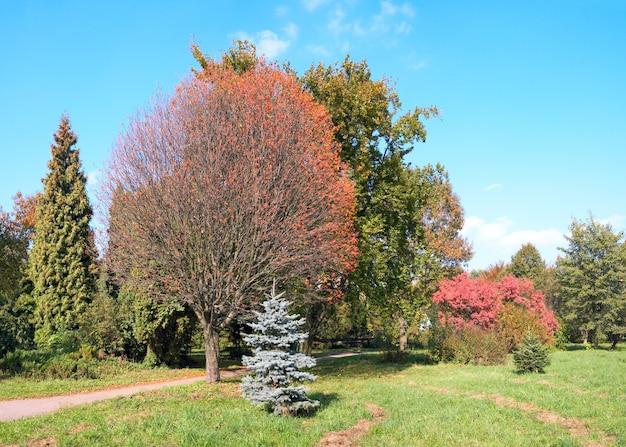Красочный осенний парк. составное изображение из четырех кадров.