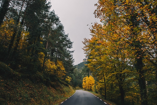 Colourful autumn road in the middle of the forest