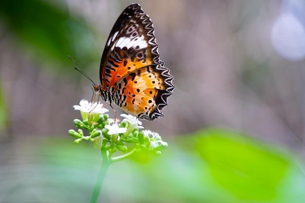 Красочная бабочка на белом цветущем цветке в лесу